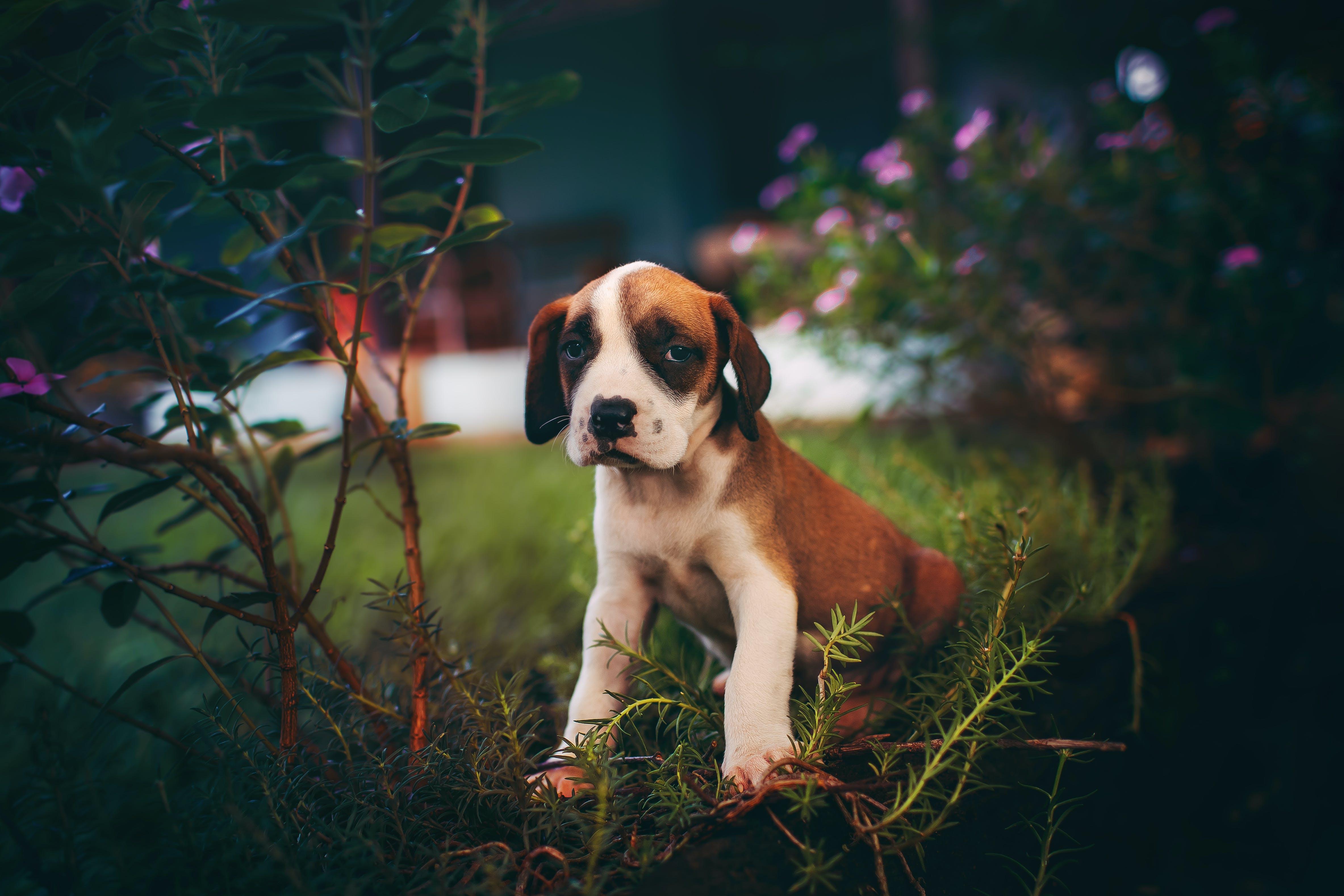 Fotos de stock gratuitas de animal, animal domestico, canino, césped
