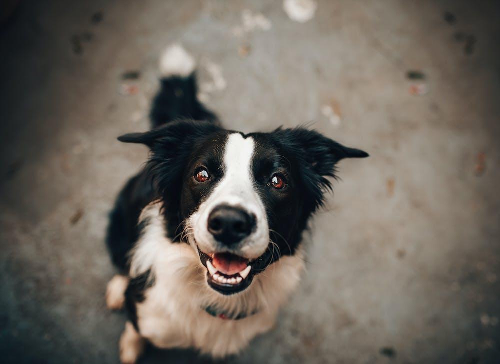 Black and white dog. | Photo: Pexels