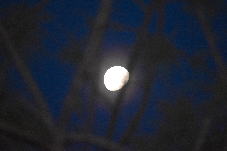 Free stock photo of blue moon, blue sky, crescent moon