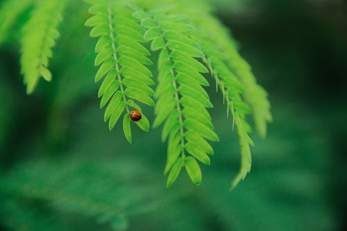 Selevtive Focus Photo of Ladybug on Green Leaf during Daytime
