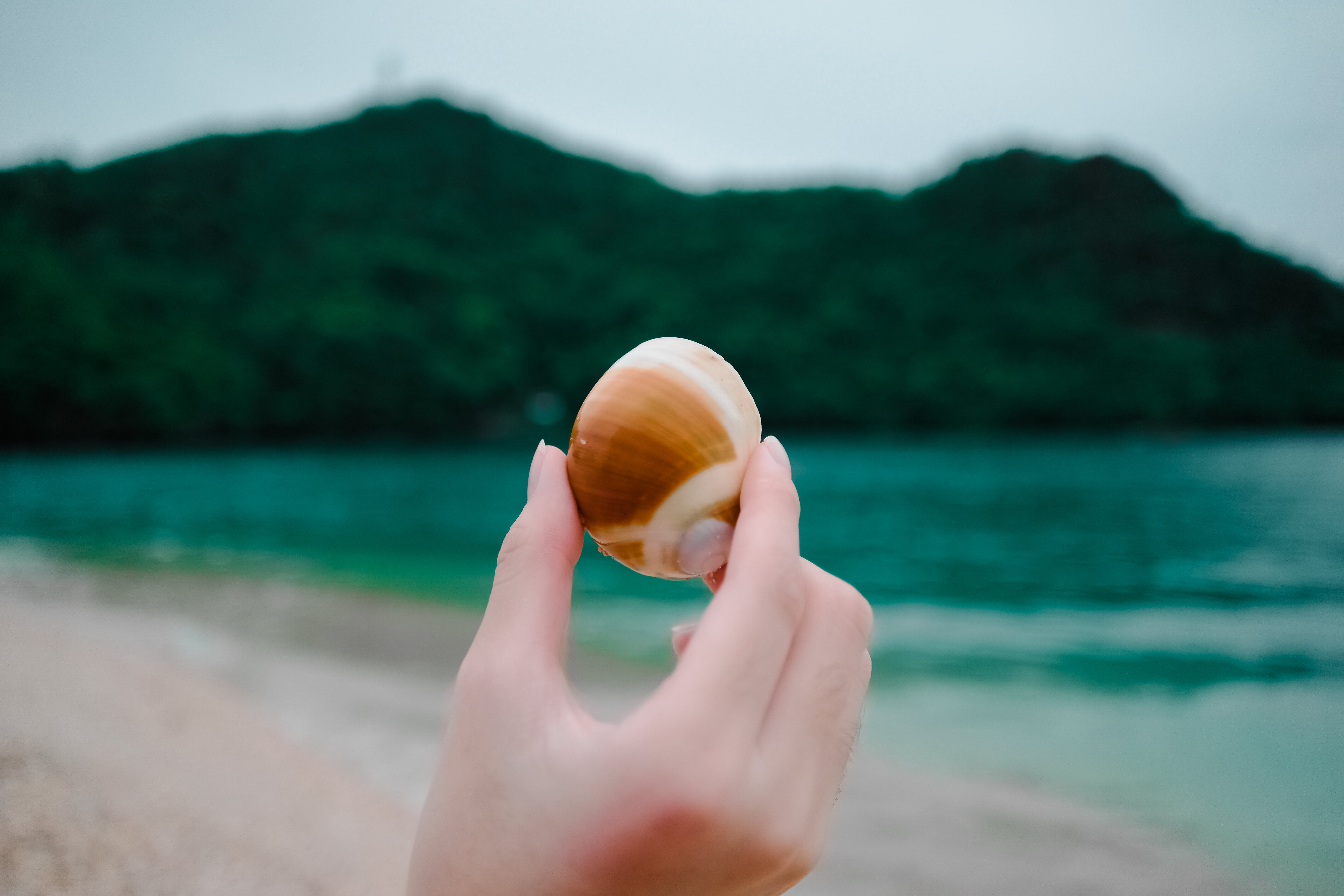 Selective Focus Photography of Person Holding Seashell