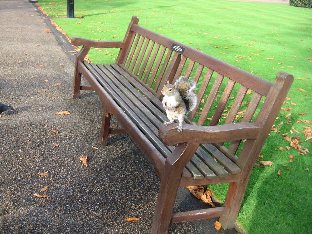 Free stock photo of squirrel london park bench