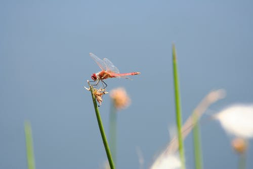 Free stock photo of dragonfly, flight, insect