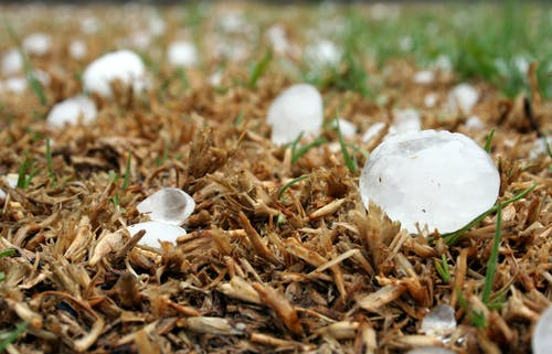 Free stock photo of gauteng, grass, hail