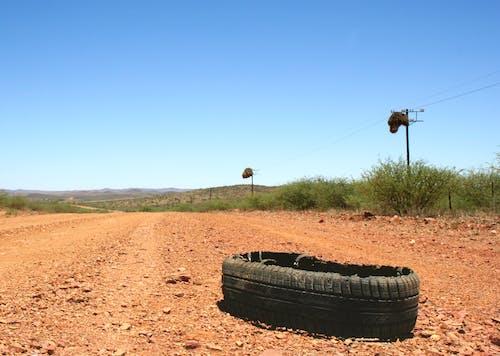 Free stock photo of bird nest, blowout, dirt road