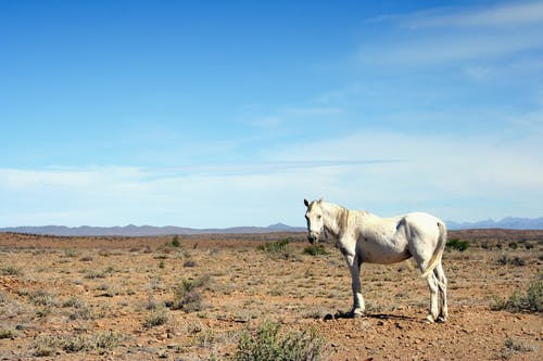 Free stock photo of arid, cape, horse