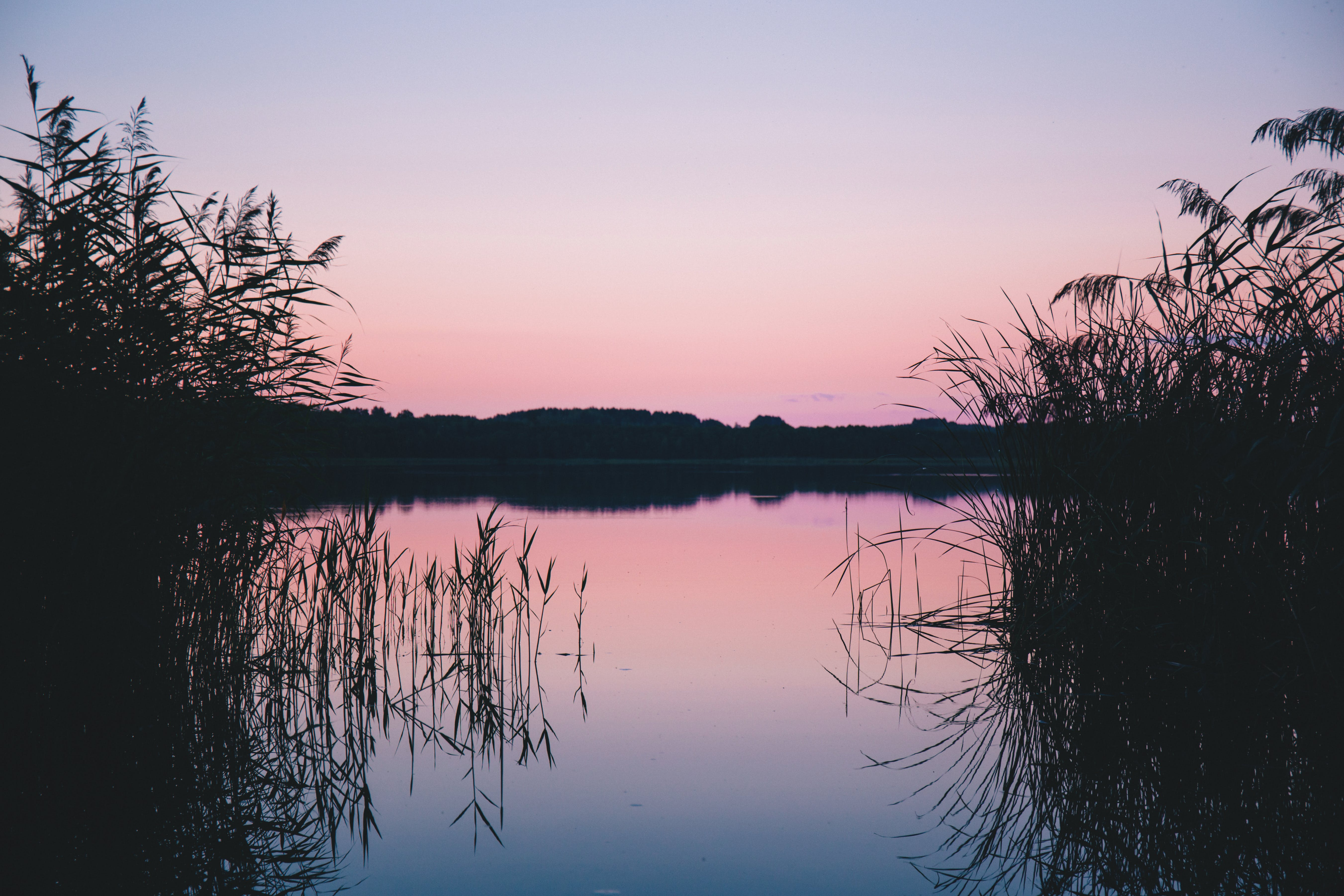 Silhouette of Grass on Body of Water
