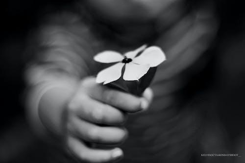 Free stock photo of darkf, darkness, feels like, flower