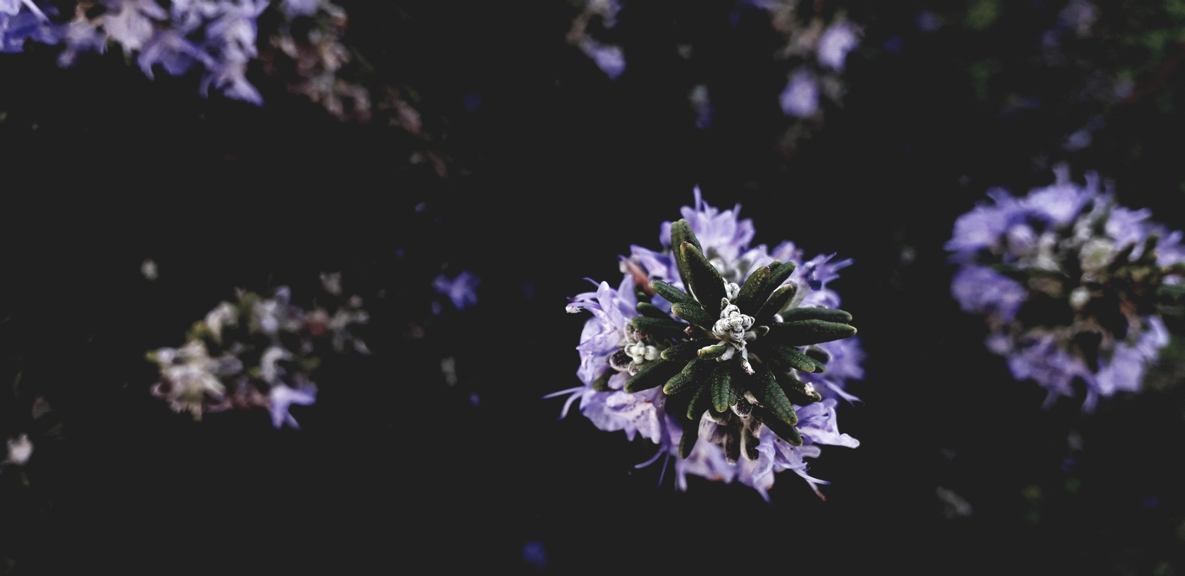 Foto Gratuita Di Bel Fiore Fiore Viola Sfondo Tumblr