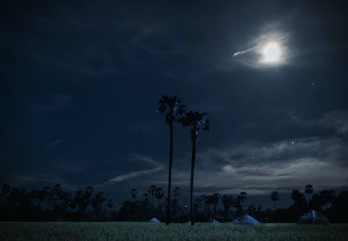 Fotos de stock gratuitas de arboles, cielo nocturno, Cocoteros, Fondo de pantalla 4k