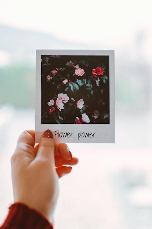 Person Holding Polaroid