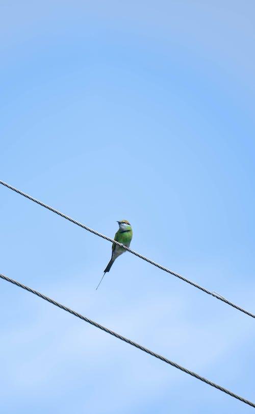 Fotobanka sbezplatnými fotkami na tému modrá obloha, vták