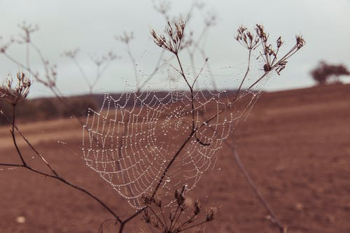 Free stock photo of arachnid, cobweb, dawn, desert