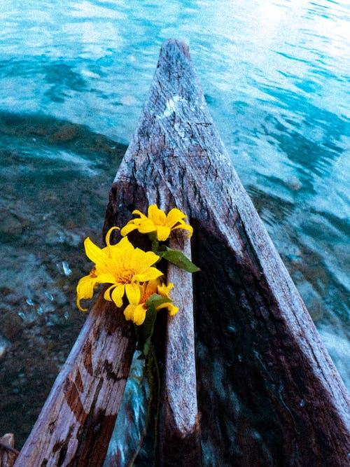 곡물, 노란색 꽃, 블루, 숲의 무료 스톡 사진