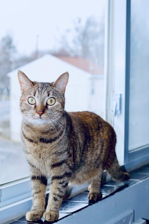 Free stock photo of animal photography, animal portrait
