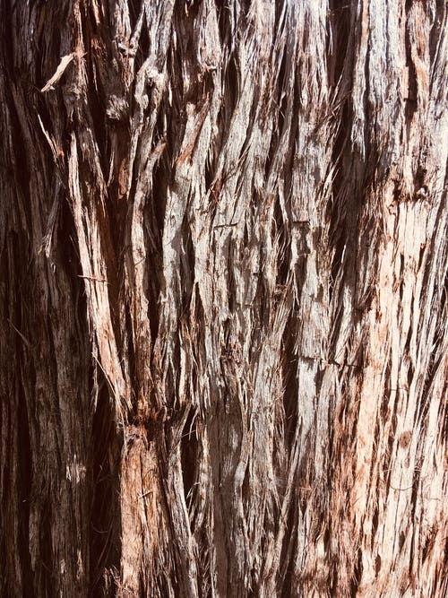Free stock photo of filter, texture, tree