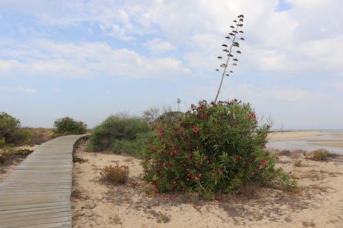 Photos gratuites de bleu, bois, bord de mer, centrale