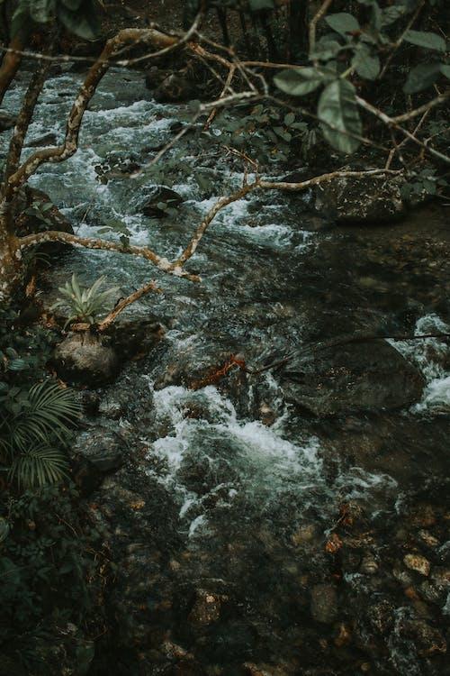 강, 개울, 물, 바위의 무료 스톡 사진