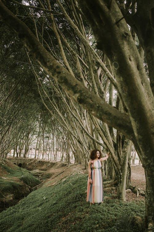 Kostenloses Stock Foto zu bäume, baumrinde, baumstämme, fokus
