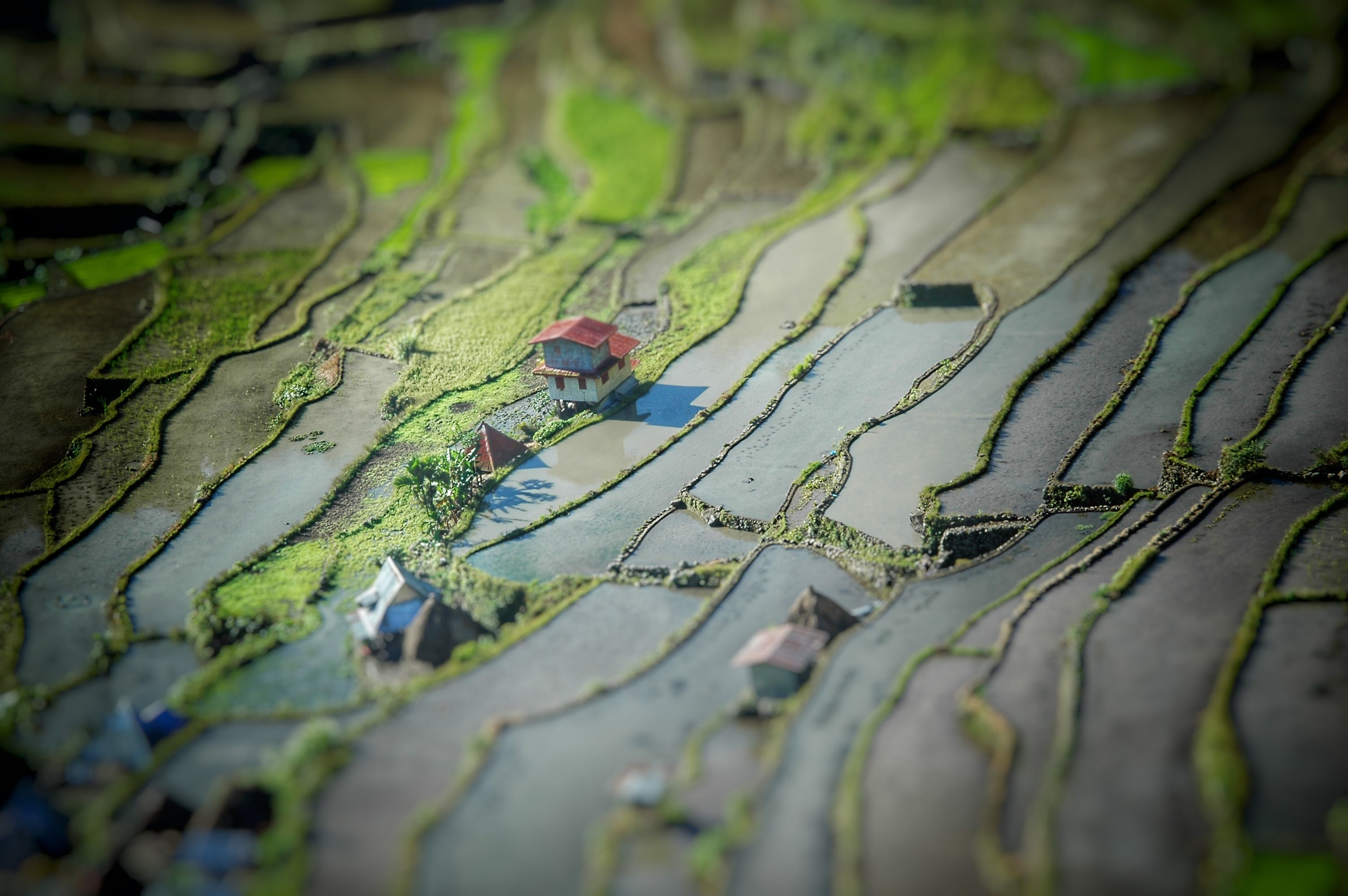 Free stock photo of fields, green, miniature, rice terraces