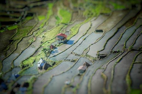 Fotos de stock gratuitas de campos, miniatura, terrazas de arroz, verde