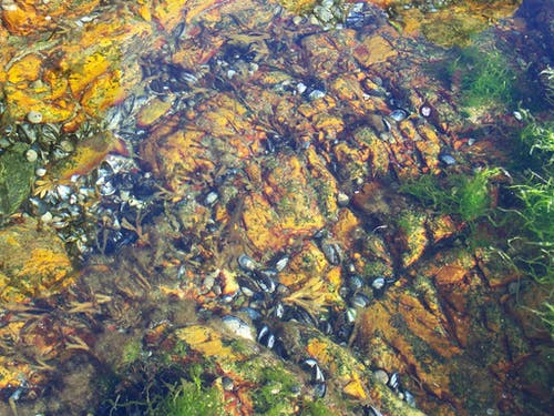 Free stock photo of coast, nature, ocean
