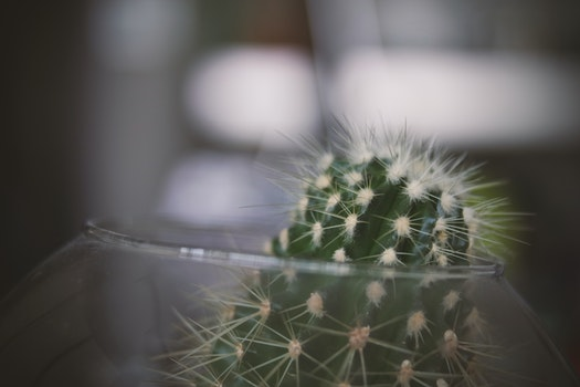 Green Cactus on Clear Glass Bowl