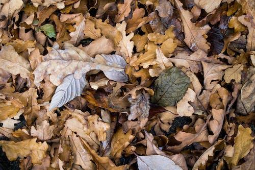 Бесплатное стоковое фото с листья, осень, падать, снимок крупным планом