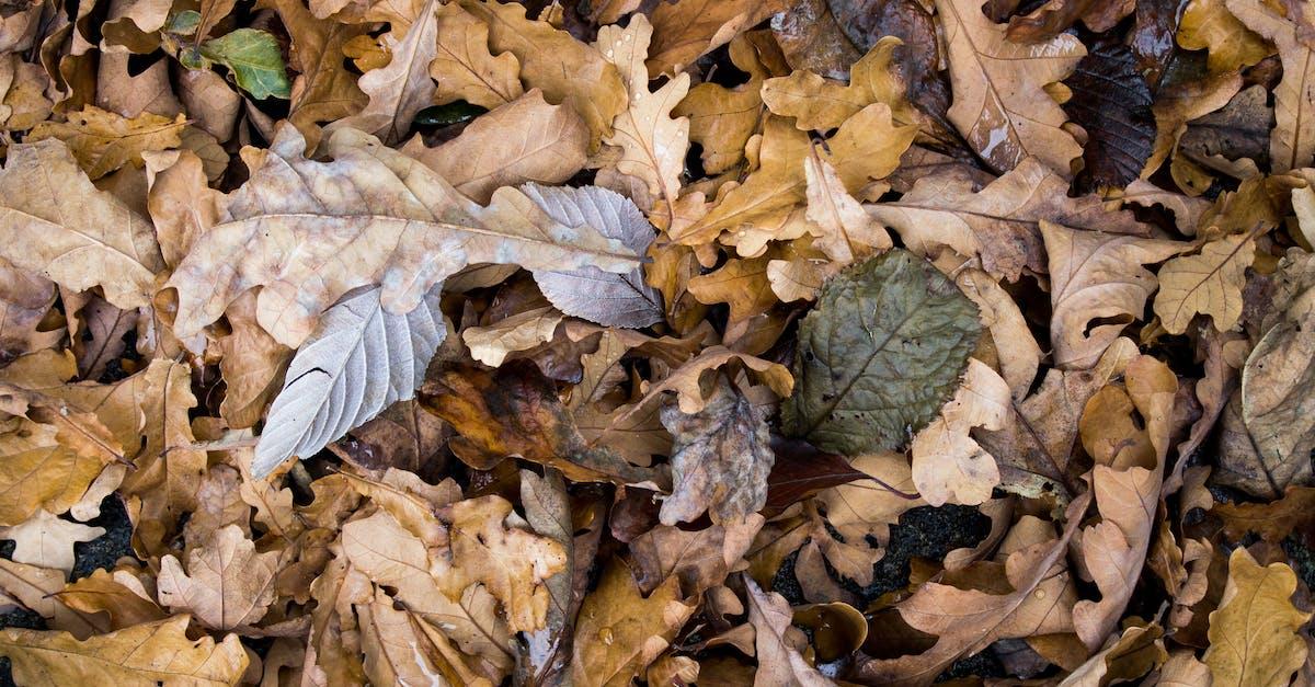 Картинки с листьев сушеных, рождеству