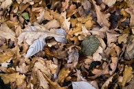 dry, leaves, autumn