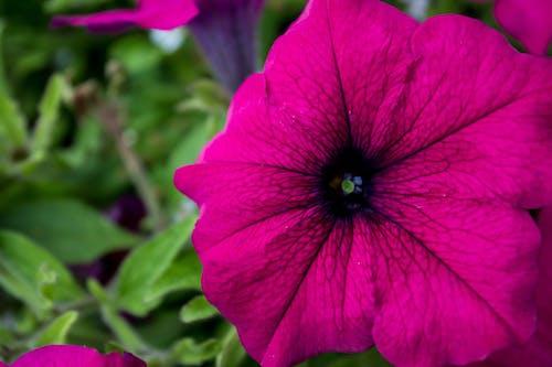 Imagine de stoc gratuită din floare, flori, fotografie, plantă