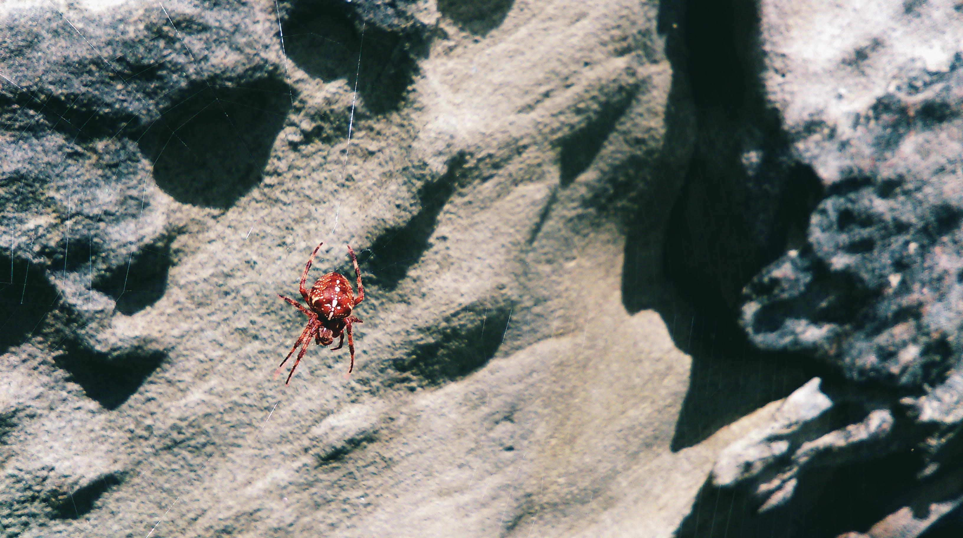 rock, spider, spider web