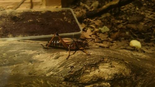 Foto stok gratis alam, serangga