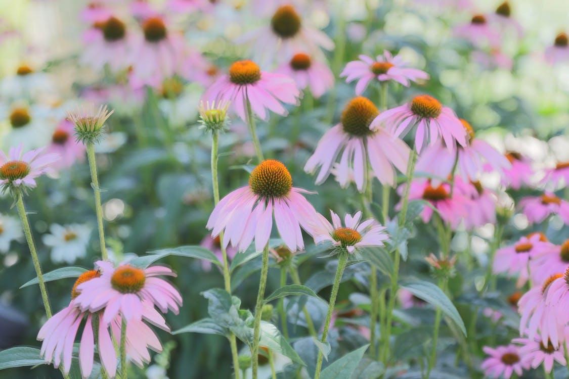 camp, flor, flora