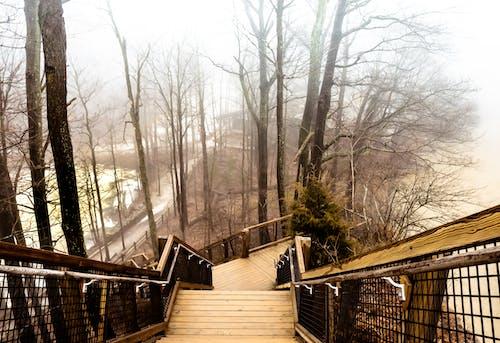 Photos gratuites de arbres, brouillard, escalier, fond d'hiver