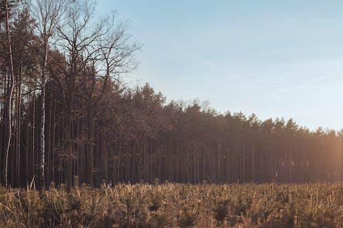 Photos gratuites de coucher de soleil, forêt, nature, paysage