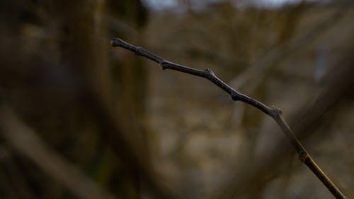 冒險, 棍子, 森林, 樹 的 免费素材照片