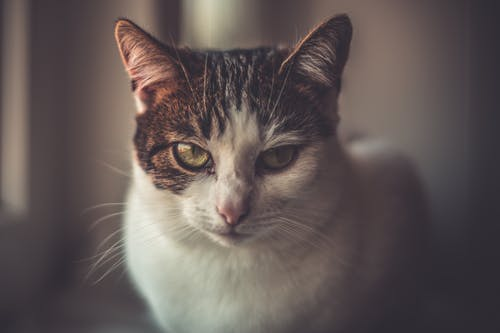 Shallow Focus Photo of White and Brown Cat