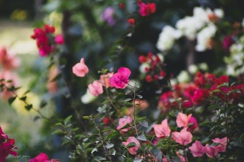 Безкоштовне стокове фото на тему «гарний вид, Денне світло, квітник, краєвид»