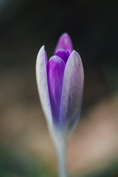 100 mm, bellesa a la natura, cap de flors