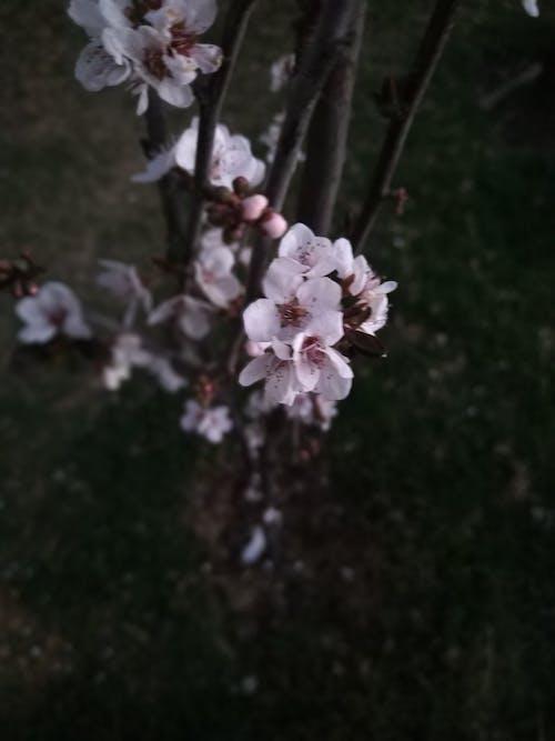 Ingyenes stockfotó virág témában