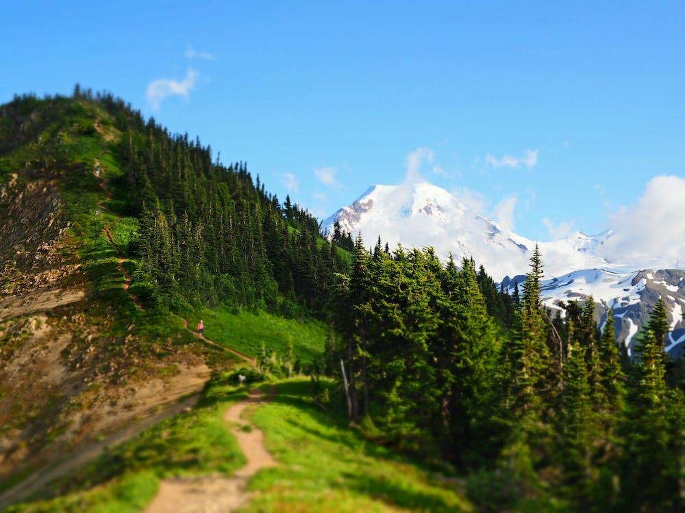 altitude, alto, árvores