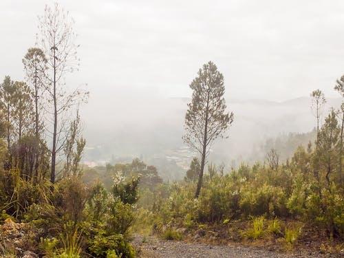 Gratis lagerfoto af australsk, busk, grå skyer, skrubbe