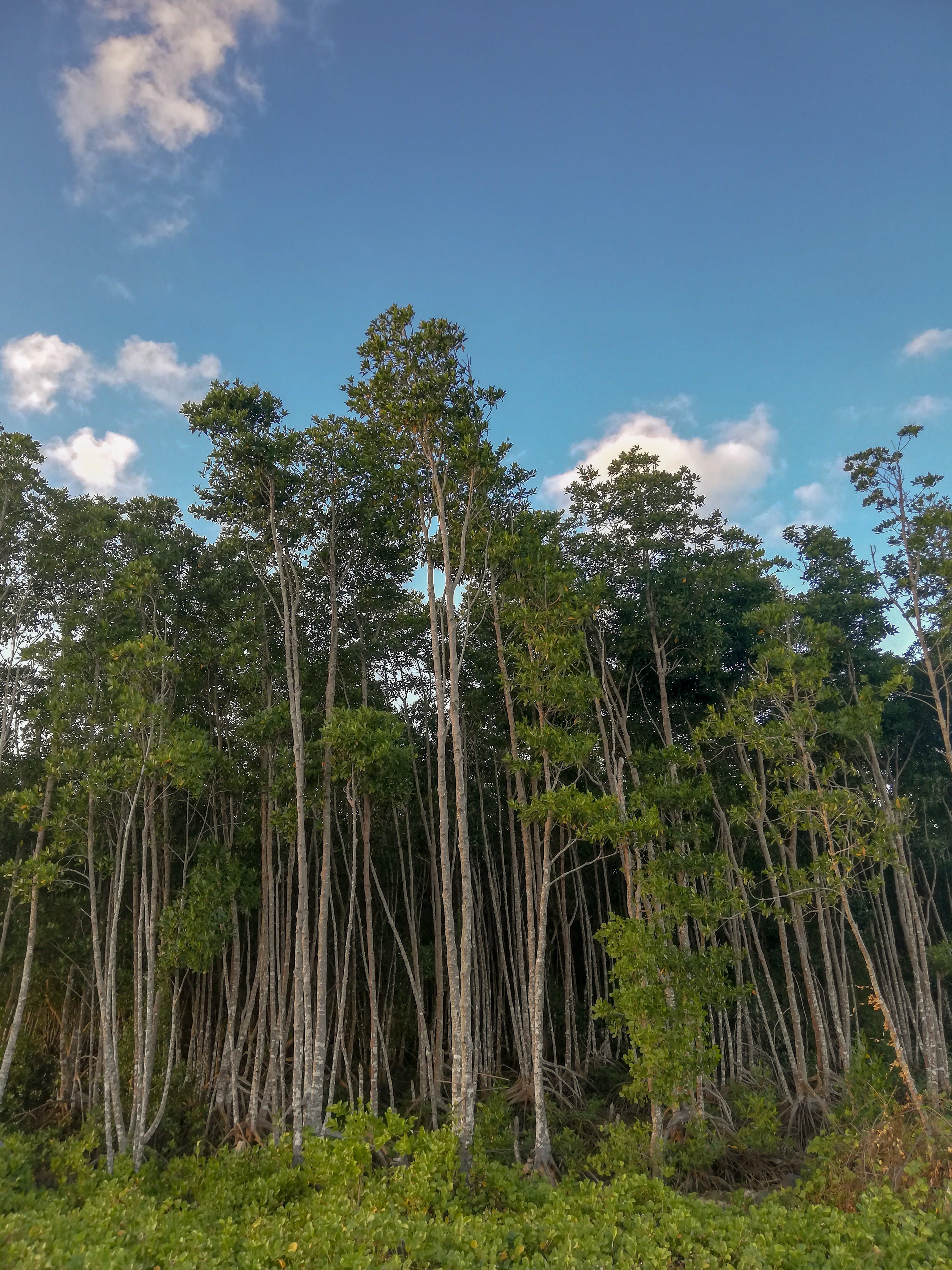Gratis stockfoto met bomen, groen, kalm, koe