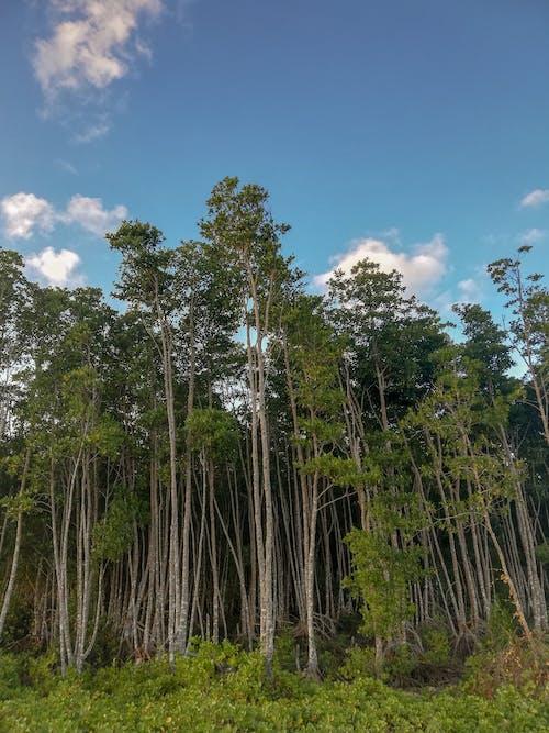 Fotobanka sbezplatnými fotkami na tému fotografia prírody, kokosové palmy, krása v prírode, krava