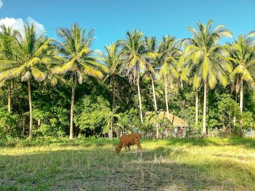 คลังภาพถ่ายฟรี ของ mangroove, การถ่ายภาพธรรมชาติ, ความงามในธรรมชาติ, ชีวิตธรรมชาติ
