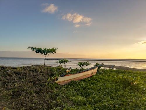 Immagine gratuita di alberi, alberi di cocco, barca, bellezza nella natura