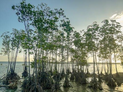 Immagine gratuita di alberi, alberi di cocco, bellezza nella natura, calma