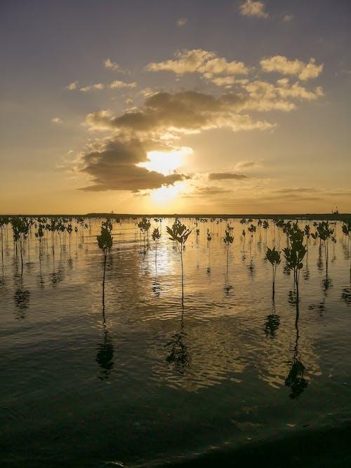 Základová fotografie zdarma na téma fotografie přírody, klid, kokosové palmy, krása v přírodě