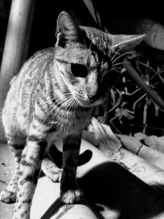 Cat strips